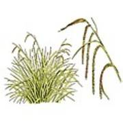 Pendulous Sedge (carex Pendula) Art Print