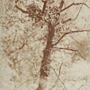 Photograph Of A Tree Art Print