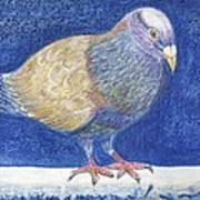 Pigeon On Snowy Wall Art Print