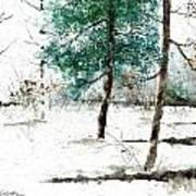 Pine Woods Art Print