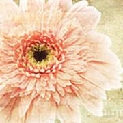 1 Pink Painterly Gerber Daisy Art Print