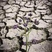 Plant Growing Through Dirt Crack During Drought   Art Print