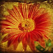 Plastered Petals Art Print
