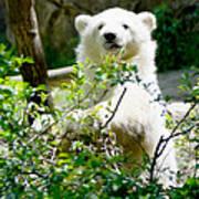 Polar Bear Cub  Art Print
