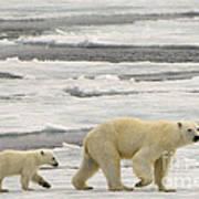 Polar Bear With Cub Art Print