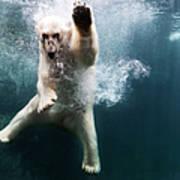Polarbear In Water Art Print