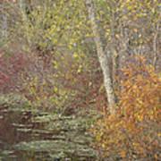 Pondside Pastel Art Print