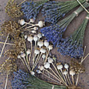 Poppy Seed Pods And Dried Lavender Art Print by Tim Gainey