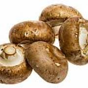 Portobello Mushrooms Art Print