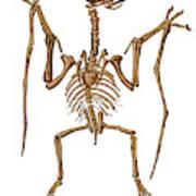 Pterodactylus, Extinct Flying Reptile Art Print