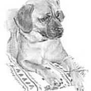 Puppy On A Blanket Pencil Portrait Art Print