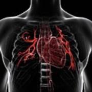 Pulmonary Arteries Art Print