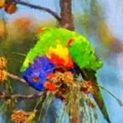 Rainbow Lorikeet Art Print