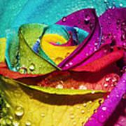 Rainbow Rose Art Print