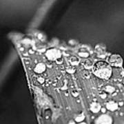 Raindrops On Grass Blade Art Print