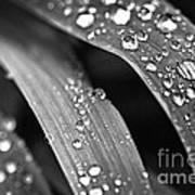 Raindrops On Grass Blades Art Print