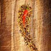 Red Hot Chilli Concept Art Print