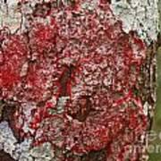 Red Lichen  Art Print