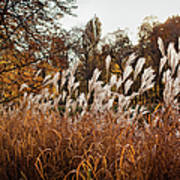Reeds Highlighted By The Sun Art Print