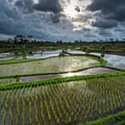 Rice Terraces In Central Bali Indonesia Art Print