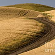 Road Through Wheat Field Art Print