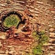 Roots Of A Money Tree Art Print