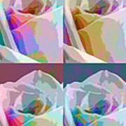 Rose Four Art Print