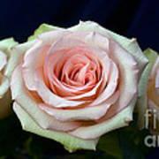 Roses 8405 Art Print