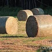 Round Hay Bales Art Print