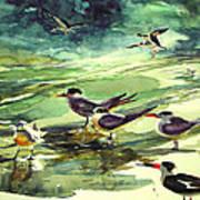 Royal Terns And Black Skimmers Art Print