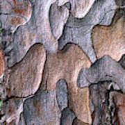 Scots Pine Bark Abstract Art Print