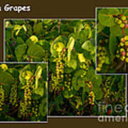 Sea Grapes Art Print