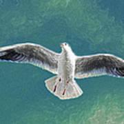 10427 Seagull In Flight Art Print