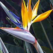 Seaport Bird Of Paradise Art Print