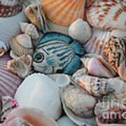 Seashells And Blue Fish Art Print