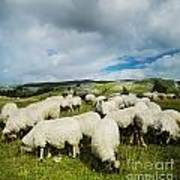 Sheep In The Field Art Print