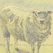 Sheep Sketch Art Print