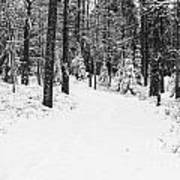 Small Road In A Snowy Forest Art Print