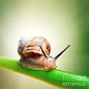 Snail On Green Stem Art Print by Johan Swanepoel