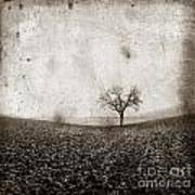 Solitary Tree In Limagne Landscape. Auvergne. France Print by Bernard Jaubert
