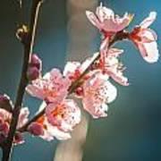 Spring Peach Tree Blossom Art Print