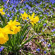 Spring Wildflowers Art Print