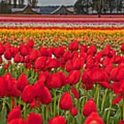 Springtime Tulip Field Art Prints Art Print