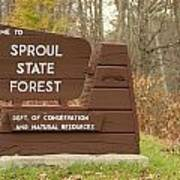 Sproul State Forest Art Print