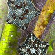 Starfish On Neptune Grass Art Print