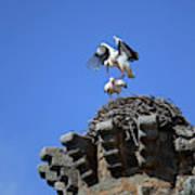 Storks On Top Of Valdecorneja Castle Art Print