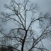 Stormy Trees Art Print