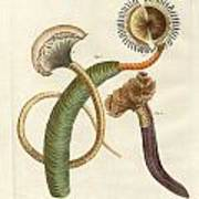 Strange Worms Art Print