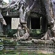 Strangler Fig Tree Roots On Preah Khan Temple Art Print