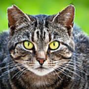 Stray Cat Stare Art Print